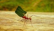 La formica dalle palmed'oro