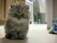 La gatta MATTIA